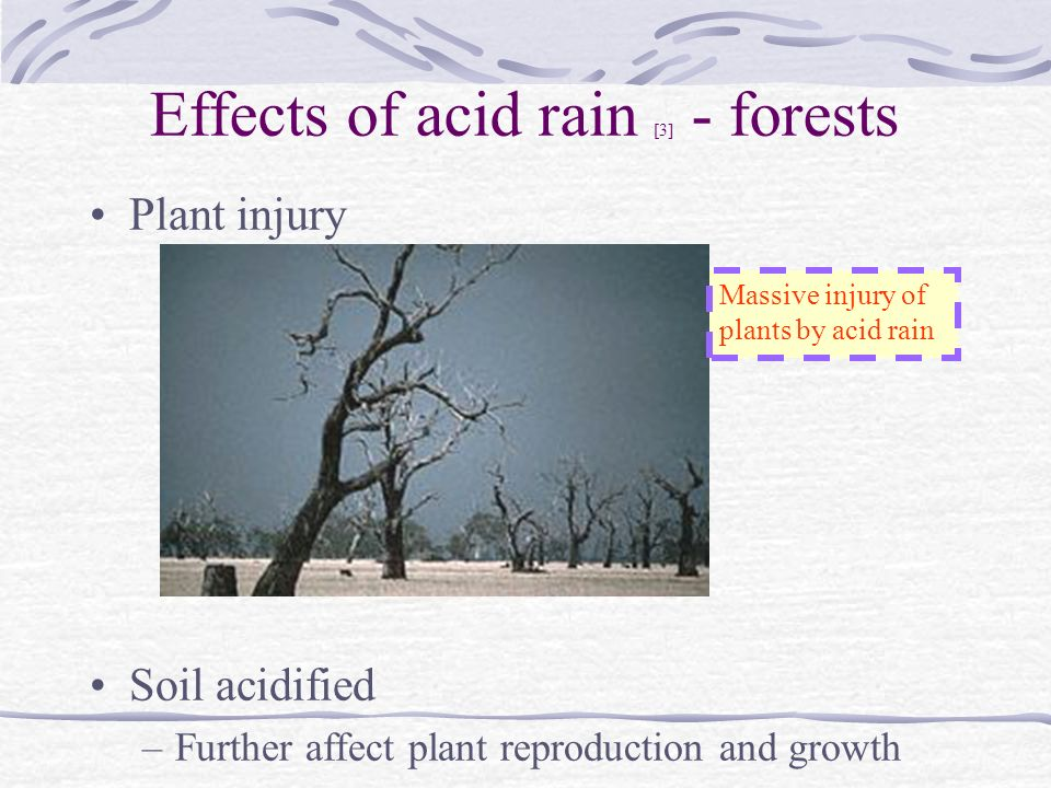 how the level of acid in a soil affects plant growth and yield Effects of cultivation techniques and plot levels on growth, yield and yield components of lowland rice grown on acid sulfate soil yield components and plant.